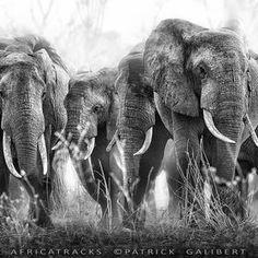 Photo Elephants in the bush. by Patrick Galibert on 500px