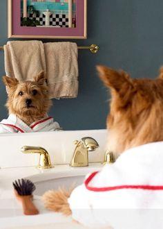 5x7 Norwich Terrier Bathroom art photo by susansphotoart on Etsy, $14.00