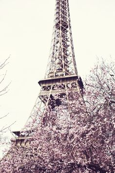 #paris cherry blossom #spring
