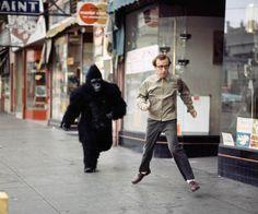 Woody Allen, running with man in gorilla suit. Woody Allen, Filmmaking Quotes, Gorilla Suit, Nat King, Sammy Davis Jr, Lomography, King Kong, Beautiful Celebrities, Beautiful People