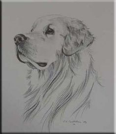 Find the desired and make your own gallery using pin. Drawn golden retriever pencil drawing - pin to your gallery. Explore what was found for the drawn golden retriever pencil drawing Pencil Art Drawings, Cat Drawing, Drawing Sketches, Drawing Tips, Drawing Ideas, Dog Pencil Drawing, Dog Drawing Simple, Sketching, Drawing Tutorials