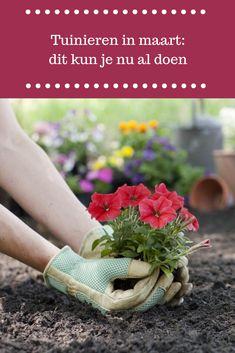 Garden Plants, Life Hacks, Patio, Bees, Seasons, Gardens, Lawn, Glass House, Weed