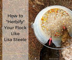 "How to ""Herbify"" Your Chickens Like Lisa Steele - Abundant PermacultureFacebookInstagramPinterestFacebookInstagramPinterest"