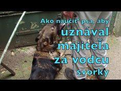 Ako naucit psa, aby uznaval majitela za vodcu svorky 2018 - YouTube Signs, Film, Youtube, Movie, Film Stock, Shop Signs, Cinema, Films, Youtubers
