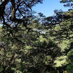 【wuchechih】さんのInstagramをピンしています。 《樹影 ………玉山塔塔加  #台灣 #塔塔加 #步道 #風景 #玉山 #森林 #photo #photography  #discovertaiwan #taiwan #scenery #forest #tree #ingerstaiwan #mountain #japan #thailand #hongkong #chinese. #color #light #ingerstaiwan #bridge #scenery》
