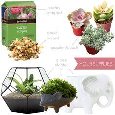 {DIY} indoor succulent planter | part //.1 | | ohnorachio!