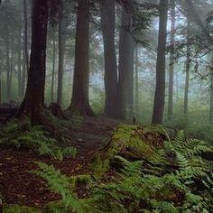 #greatsmokymountains — Photos -- National Geographic Your Shot