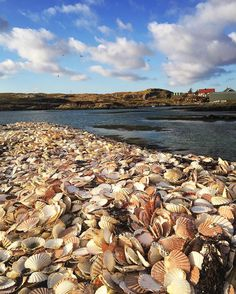 Sea of scallop shells. North Uist Scotland. by ottolenghi