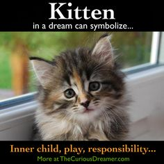 Gig Laser - Local Jobs Near Me Search 2020 - A kitten as a dream symbol can represent (as described at TheCuriousDreamer…): Your inner child p - What Your Dreams Mean, Facts About Dreams, Dream Dictionary, Dream Symbols, Dream Meanings, Sleep Dream, Im A Dreamer, Dreams And Visions, Dream Interpretation