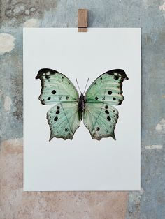 NEW Green Mother of Pearl Butterfly Print - Extra Large