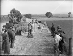 01/06/1955.06/01/1955.01 June 1955.Demonstration of Saville  silage equipment at Ardee Co. Louth. Special for McConnells. See more photos like this at www.irishphotoarchive.ie #vintage #oldphotos #blackandwhite #film #artistic #finearts #ireland #irishhistory #historyphoto #history