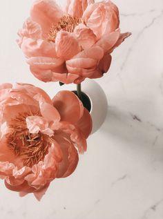 Flower Background Wallpaper, Flower Backgrounds, Flower Aesthetic, Flora, Design, Pentecost, Plants