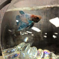 1000 images about fishy friends on pinterest betta fish for Fish tank heater petco