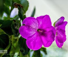 Purple & Green by LiamPhotography. Please Like http://fb.me/go4photos and Follow @go4fotos Thank You. :-)