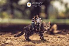Khontuelek Photography - Google 搜尋 Cats, Google, Animals, Gatos, Animais, Animales, Animaux, Animal, Kitty