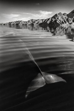 Christopher Swann ballena whale10