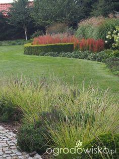 Marzenia i plany vs. rzeczywistość - strona 424 - Forum ogrodnicze - Ogrodowisko