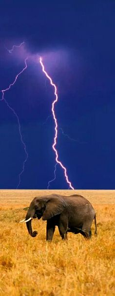 Lightning strike Africa                                                                                                                                                                                 More