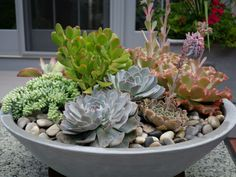 Whether you're a beginner or a seasoned gardener planting a succulent bowl is easy and fun whilst still allowing you to put your personal spin on it. Plants, Succulents, Succulent Terrarium, Cool Plants, Succulent Pots, Succulent Landscaping, Container Gardening, Garden Containers, Succulent Garden Diy