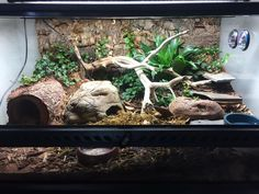 Pasta, my African fat tailed gecko, lives in a 24 x 12 x 18 Exo Terra terrarium modeled after a subt Leopard Gecko Habitat, Lizard Habitat, Reptile Habitat, Reptile Room, Crested Gecko Habitat, Reptile Cage, Reptile Enclosure, Leopard Gecko Terrarium, Terrarium Reptile
