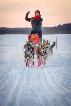 Puppies to Sled Dogs...