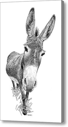 Donkey Acrylic Print by Scott Woyak. All acrylic prints are professionally printed, packaged, and shipped within 3 - 4 business days and delivered ready-to-hang on your wall. Drawing Sketches, Pencil Drawings, Art Drawings, Donkey Drawing, Stippling Art, Motifs Animal, Christmas Drawing, Animal Paintings, Farm Paintings