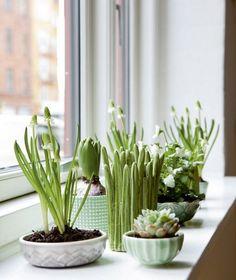 Window Garden - www.freshinterior.me