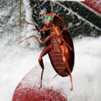 Cue scary music: Cockroaches that can survive New York winters reach the U.S. - The Week