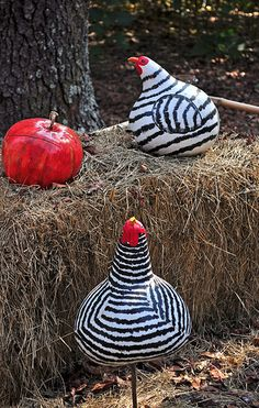 chickens gourds