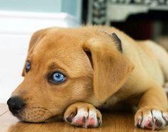 Esos ojitos azules