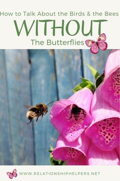 """How To Talk About the Birds & The Bees Without the Butterflies Make the """"sex talk"""" simpler! Traci Lester provides helpful advice to parents in this episode of Relationship Helpers! Christian Living, Christian Faith, Gentle Parenting, Parenting Hacks, Raising Godly Children, Birds And The Bees, Christian Parenting, The Help, Encouragement"""