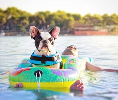 """My Dad brings me 'boating' because I'm a Chick Magnet"", poor DD, the Frenchie, French Bulldog, he's too cute for his own good."