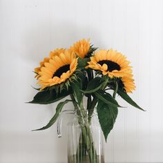 Sunflowers bouquet in a jar My Flower, Beautiful Flowers, Sunflower Party, Sunflower Flower, Sunflower Wallpaper, Flower Aesthetic, Plant Aesthetic, Foto Pose, Tumblr Wallpaper