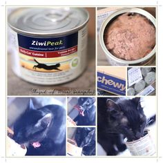 ZiwiPeak Daily-Cat Cuisine Venison Canned Cat Food from | Get FREE Samples by Mail | Free Stuff