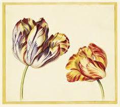 Image result for botanical prints