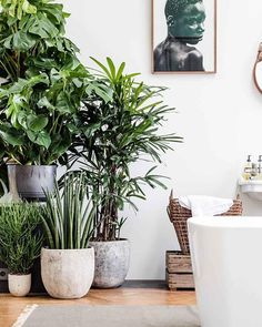 Fill your space with fresh foliage. Incorporating potted plants makes a room feel lighter and brighter.