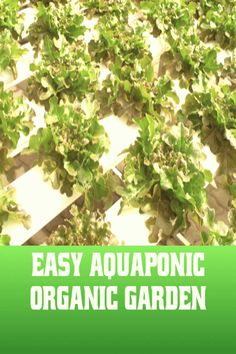 #Hydroponics #best #gardening Easy Aquaponic System for Best Organic Nutrition Easy Aquaponic System for Best Organic Nutrition HealthyLuxeSustainableAndHolisticLifestyle holisticorganichealthylife ORGANIC GARDENING Imagine a Garden Where Theres No More Weeds or  gardening shedbrp classfirstletterwelcome to the web page with the Most content about nutritionpA quality photograph can tell you many things You can find the max gracefully image that can be presented to you about weeds in this…