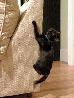 How to Stop a Cat from Clawing Furniture. (This may come in handy as I'm finally getting my kitten this week!) :D