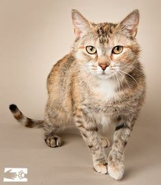 This exotic looking kitty is Monica!