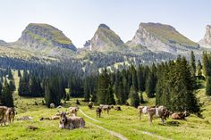 Churfirsten-Toggenburg Places In Switzerland, Planet Earth, Alps, Trekking, The Good Place, Road Trip, Wanderlust, Hiking, Explore