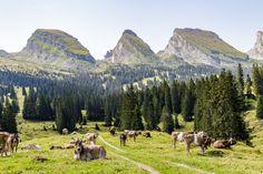 Churfirsten-Toggenburg Places In Switzerland, Planet Earth, Alps, Trekking, The Good Place, Road Trip, Hiking, Wanderlust, Adventure
