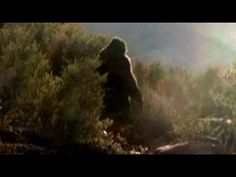 2 Men Attacked By Bigfoot While Investigating A Sighting Report In Washington State 2015 - BCS | The Fortean Slip