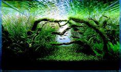 アクアリウムの世界 美しい水槽レイアウト集の画像   ギャザリー