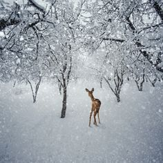 The white forest by Caras Ionut, via 500px