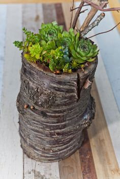 Great idea to plant in the end of a piece of wood!