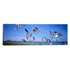 "East Urban Home Panoramic Flock of Seagulls Flying on the Beach, New York State Photographic Print on Canvas Size: 20"" H x 60"" W x 1.5"" D"