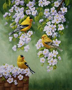American Goldfinch & Apple Blossom painting by Crista Forest