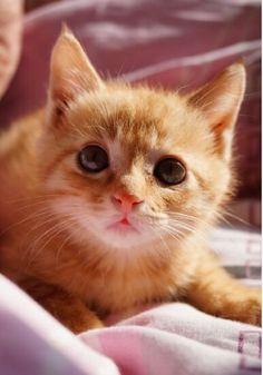 #lovely #cat