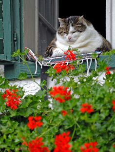 http://img11.nnm.ru/1/0/1  Fat Cat