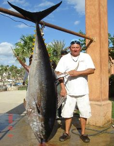 315 lb tuna caught near Cabo San Lucas, Mexico. One of the best locations for deep sea fishing in the world.